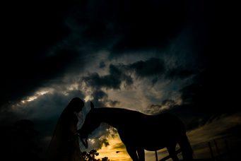 Bride Horse Bridal Picture
